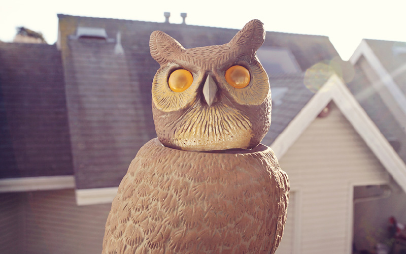 owl decoy to scare birds off roof