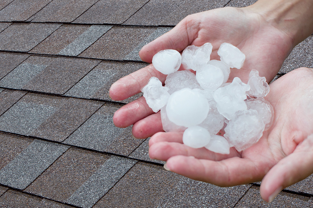 person holding hailstones above a shingled roof